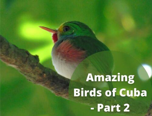 The Amazing Birds of Cuba – Part 2