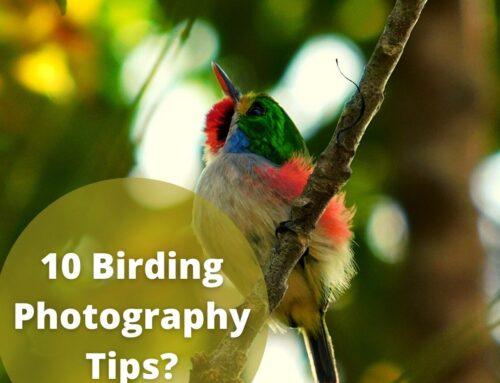 10 Birding Photography Tips