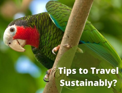 10 Tips to travel sustainably