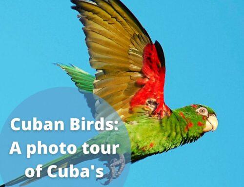 Cuban Birds: A photo tour of Cuba's Birdlife