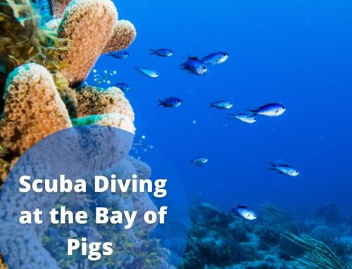 Scuba Diving in the Bay of Pigs