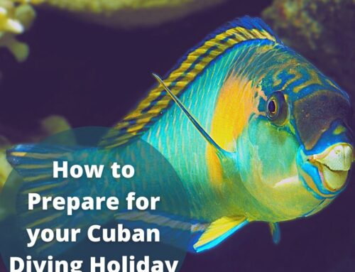 How to Prepare for your International Diving Holiday