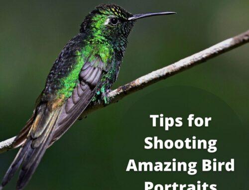Tips for Shooting Amazing Bird Portraits